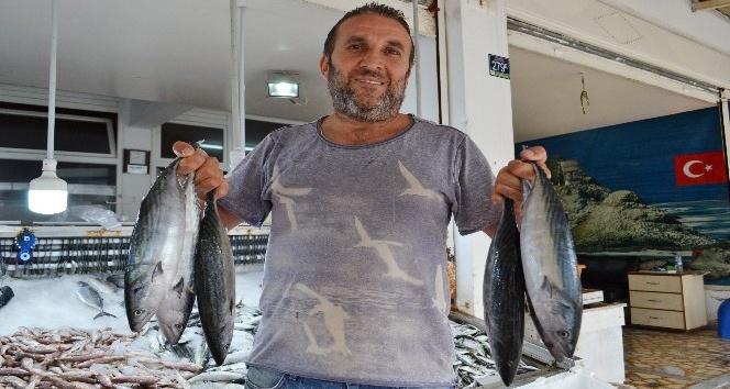 Karadeniz'de balık yok
