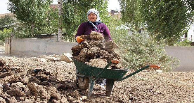 Sivas'ta kışlık tezek hazırlıkları başladı