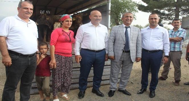 Osmaniye'de 24 çiftçiye 144 büyükbaş hayvan dağıtımı yapıldı