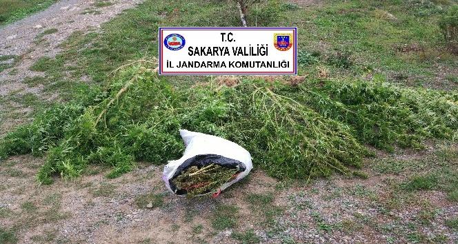 Sakarya'da 5 ilçede uyuşturucu operasyonu
