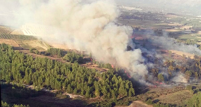 Seydikemerde orman yangını: 5 dönüm alan yandı