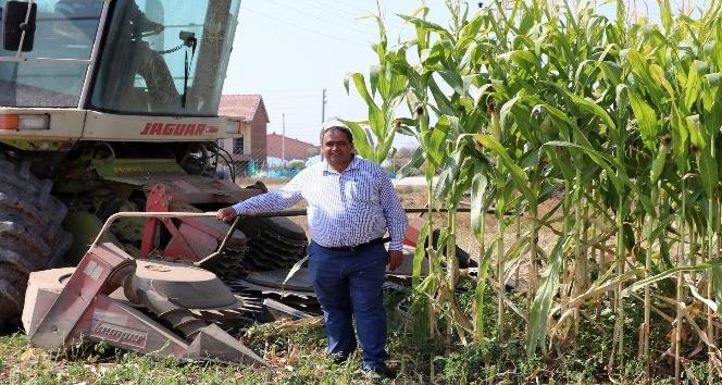 Aksaray'da ikinci ekim silajlık mısır hasadı başladı