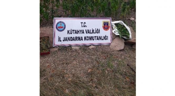 Kütahya'da jandarmadan uyuşturucu operasyonu: 2 gözaltı