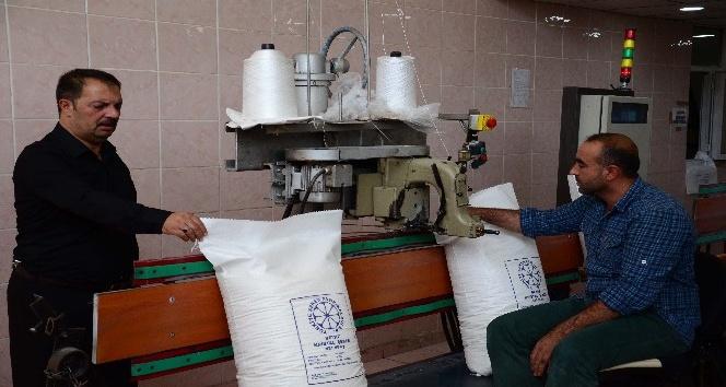 Muş şeker fabrikasında üretim başladı
