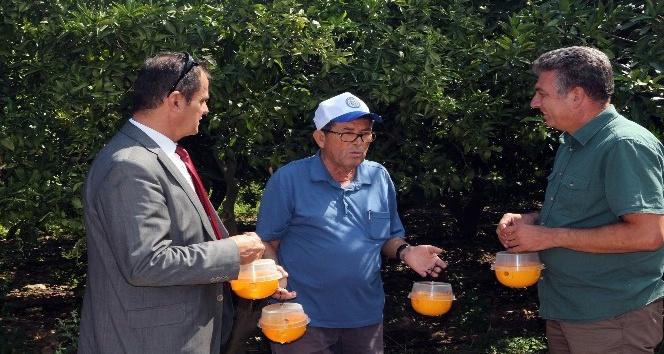 Akdeniz Meyve Sineği İle Mücadele çalışmaları devam ediyor
