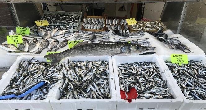Karadeniz'de balıkçı ağlarına levrek balığı takıldı