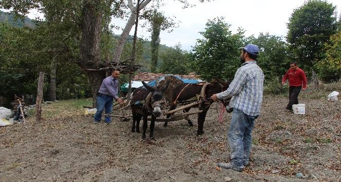 Kırsal mahallelerde eşekle tarım revaçta