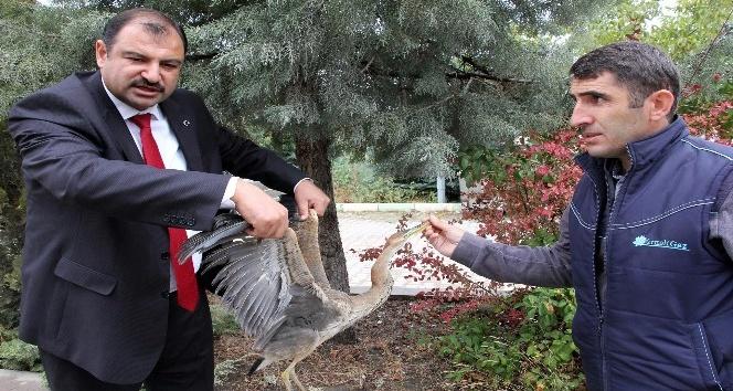 Tedavisi yapılan balıkçıl kuş tekrardan doğaya salındı