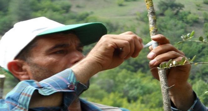 Adana'da orman köylüsüne destek