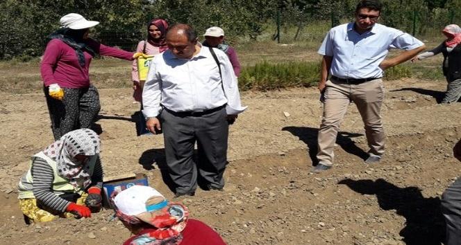 Eğirdir'de üretilen 6.5 milyon fidan toprakla buluşacak