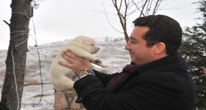 Başkan Bakıcı'dan 4 Ekim Hayvanları Koruma Günü mesajı
