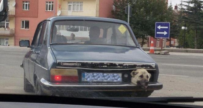 Stop lambası yerine köpek kafası