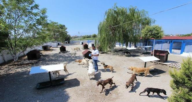 Saruhanlı Belediyesinden sokak hayvanlarına şefkat eli