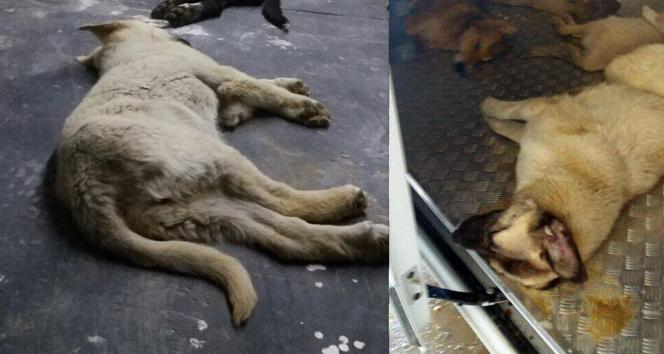 4 Ekim Dünya Hayvanları Koruma Gününde yürek sızlatan olay