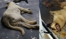 4 Ekim Dünya Hayvanları Koruma Günü'nde yürek sızlatan olay