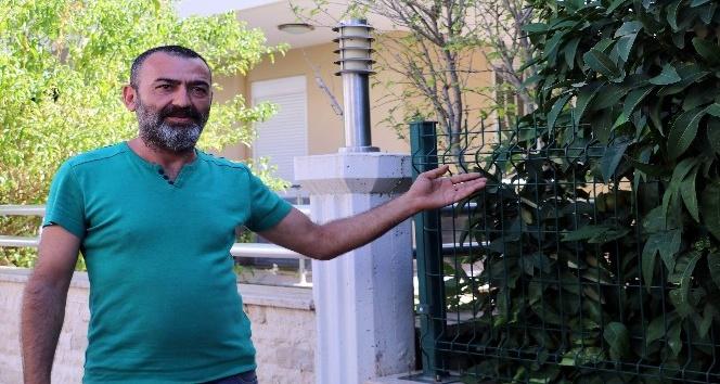 Antalya'da köpeklerin katledilmesi