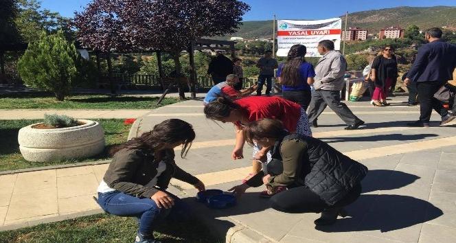 Tunceli'de Sokak Hayvanları Koruma Günü etkinlikleri