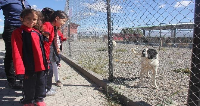 Öğrenciler, bakım evindeki sokak hayvanlarını ziyaret etti