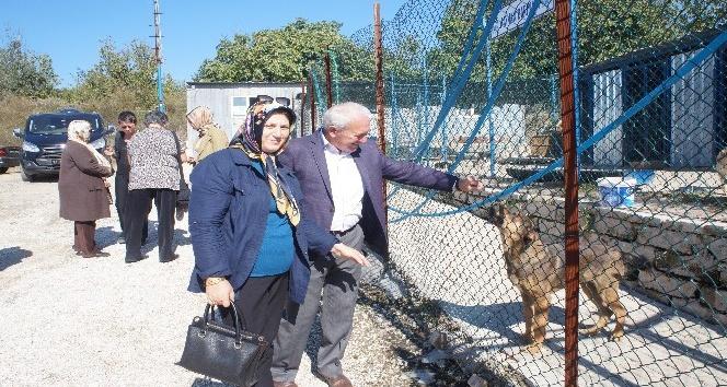 Lapseki'de Dünya Hayvanları Koruma Günü etkinlikleri
