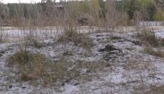 Ardahana karla karışık dolu yağdı