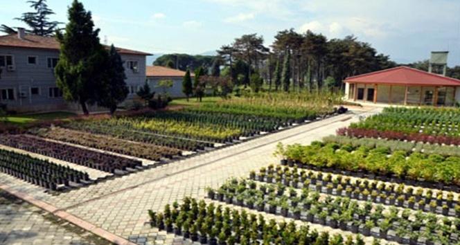 Samsun'da bu yıl 4,8 milyon fidan üretildi