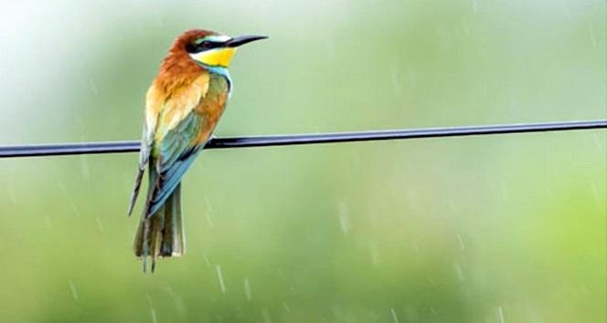 Samsun'da 154 endemik bitki ve hayvan türü tespit edildi