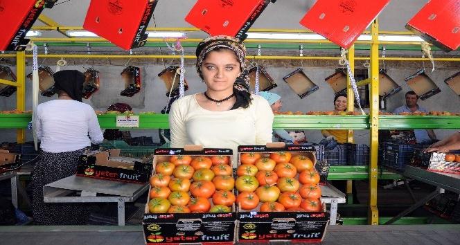 Rusya'nın domates ithalatına Mersin talip