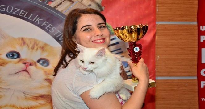 Pursaklar'da hafta sonu Kedi Güzellik Festivali var