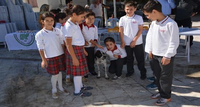 Sokak hayvanları için Su ve Mama kabı dağıtıldı
