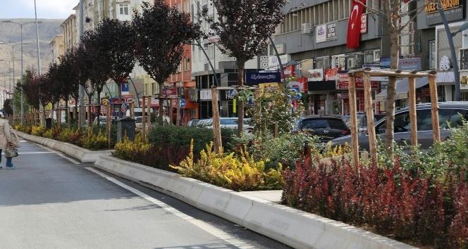 Çankırıda Atatürk Bulvarına bitkisel bakım