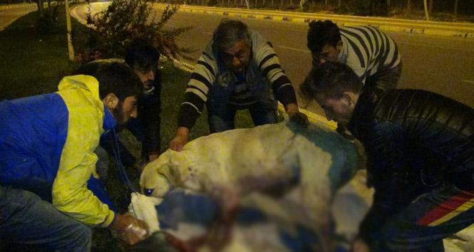Köpekleri acımadan silahla vurdular