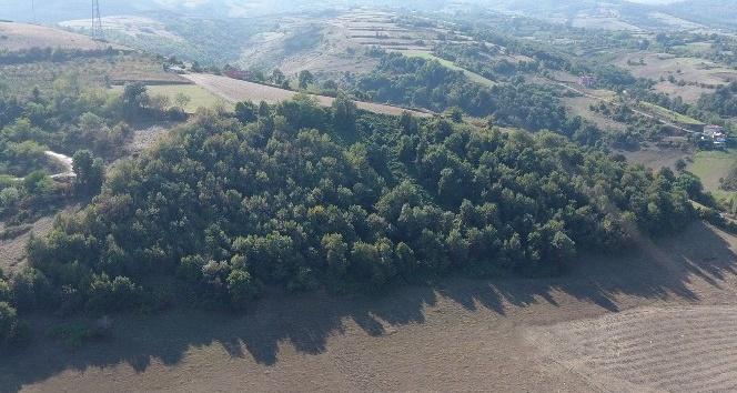 Tekkeköy'e 'Masal Ormanı'