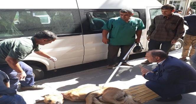 Bismil Belediyesi sokak köpeklerine sahip çıkıyor