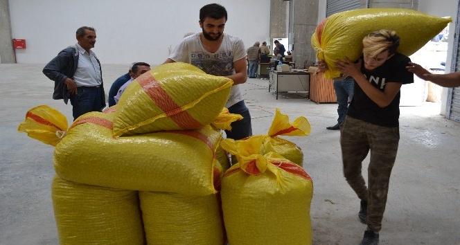 TMO üreticilere 420 milyon lira ödeme yaptı
