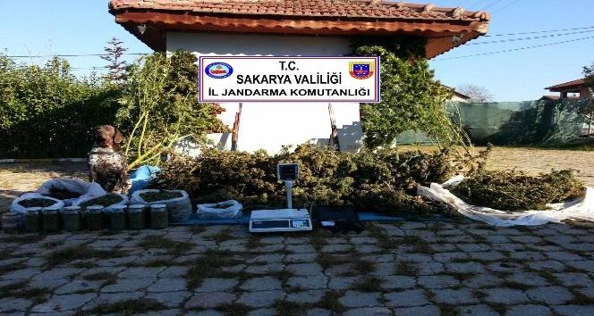 Sakarya'da 70 kilogram kubar esrar ele geçirildi
