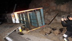 Hayvan yüklü kamyon devrildi: 1 yaralı