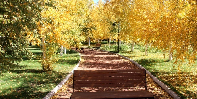 Sonbaharın sarısına bürünen Ata Botonik Parkta kartpostallık görüntüler
