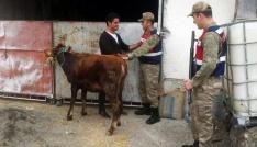 Tokatta hayvan hırsızlığından 5 kişi tutuklandı
