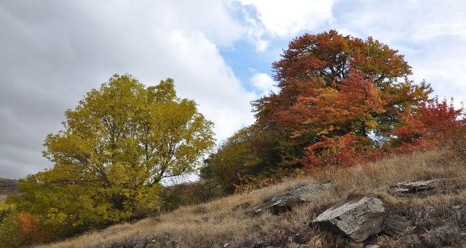 Karsta sonbaharda renk cümbüşü