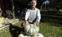 25 ve 30 kiloluk dev bal kabakları