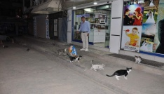 Siirtte sokak hayvanları unutulmadı