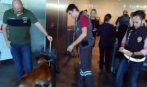 Avusturyaya giden yabancı yolculara köpekli arama!