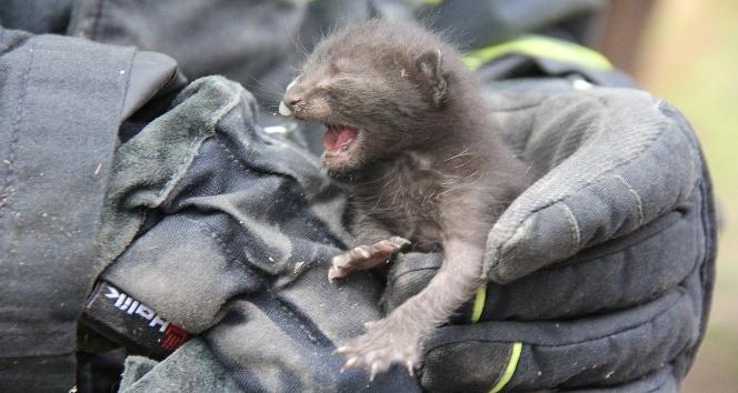 Çatıda sıkışan yavru kediyi itfaiye kurtardı