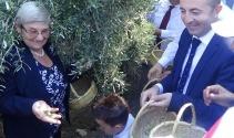 Karatay: Zeytin ömrü uzatıyor