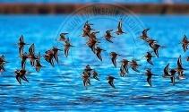 Kuş Cenneti'nden objektiflere yansıyanlar