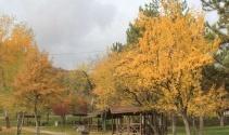 Bozkırda kartpostallık sonbahar manzaraları