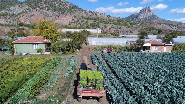 Sarıcakaya yeşillik ihracatına devam ediyor