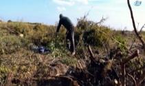 'Para etmiyor' diye bin 200 nar ağacını kesti