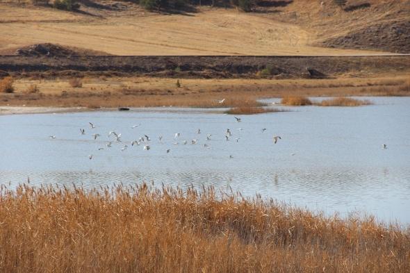 Sivas'ın kuş cenneti Tödürge Gölü'nde sonbahar
