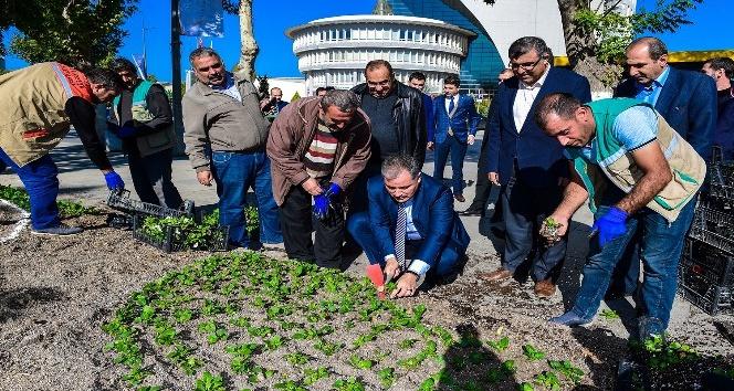 Başkan Çakır, işçilerle birlikte çiçek dikti